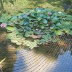 Tenax Plant and Pond Protect Net Roll 14' x 30' Black - 2A140068